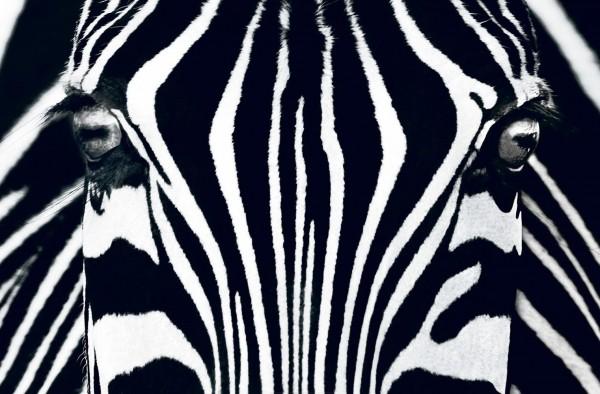 Fototapete Black & White I